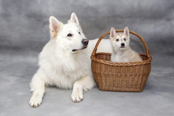 Interieurtips hond
