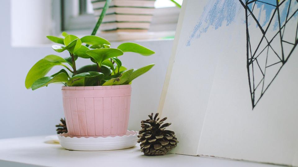 5 reden waarom planten in huis