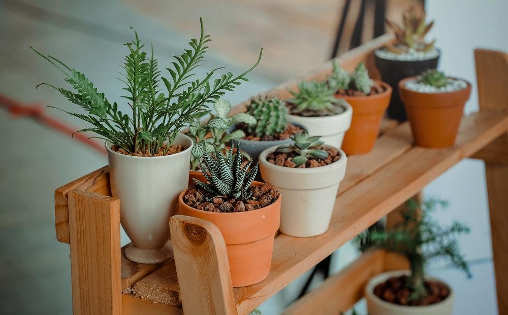 vrolijke binnen planten