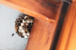 Bijenbekjes gebruiken tegen ongedierte