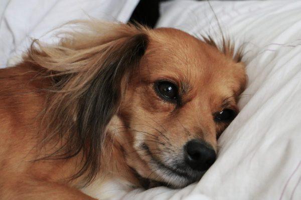 Help, mijn hond heeft gevoelige maag- en darmstelsel
