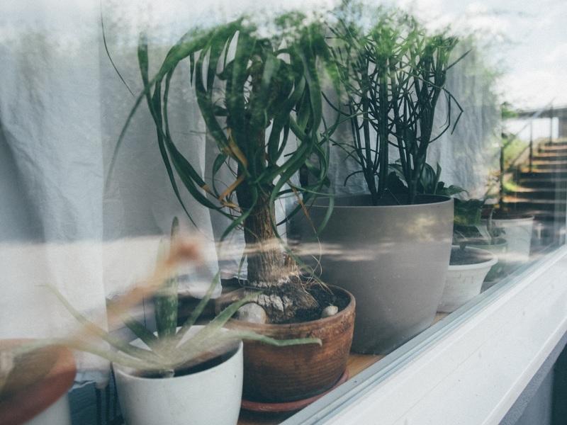 gebruik meer groen in huis