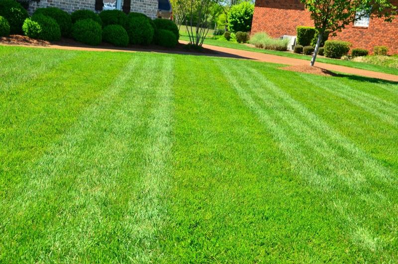 kunstgras of gewoon gras