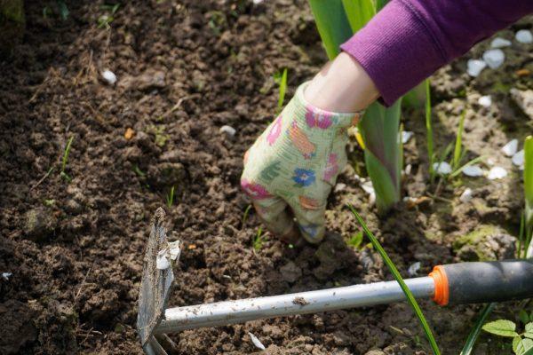 In tuin werken