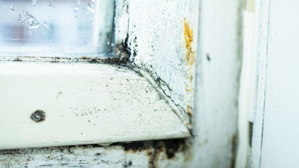 Tips voor het verwijderen van schimmel in huis