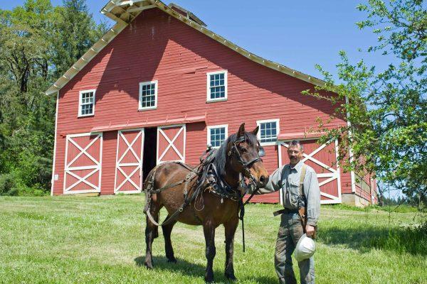 Paard aan huis houden