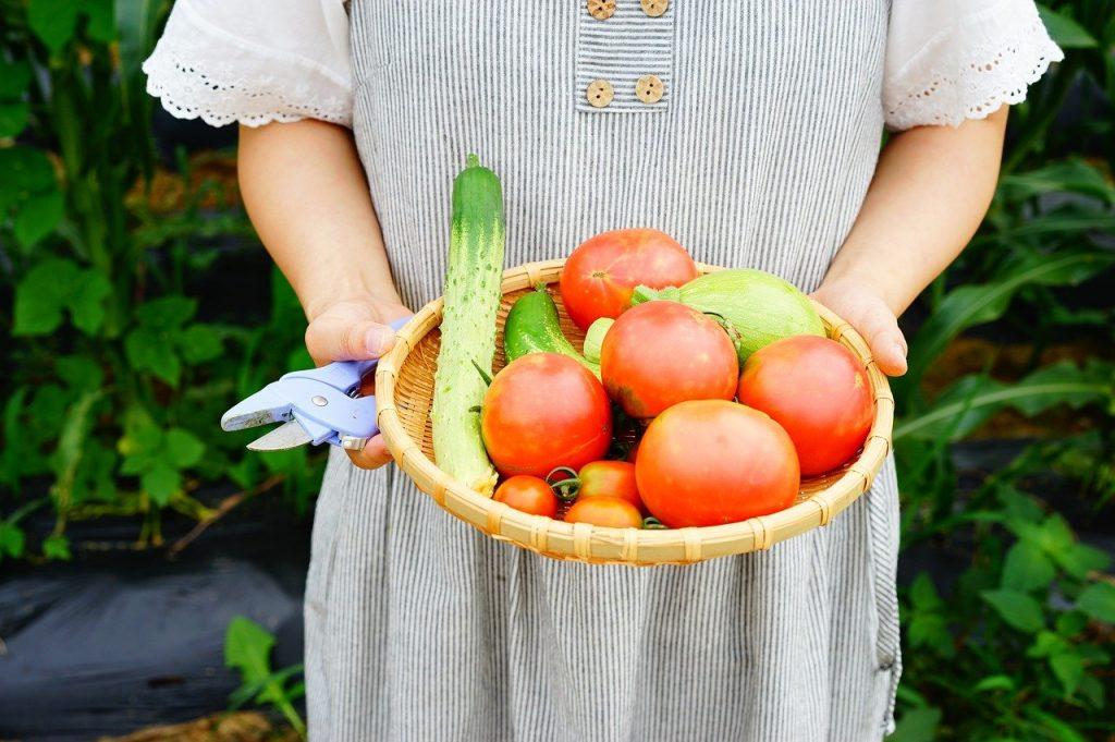 Deze 'Italiaanse' groenten en kruiden kun je in je eigen moestuin kweken