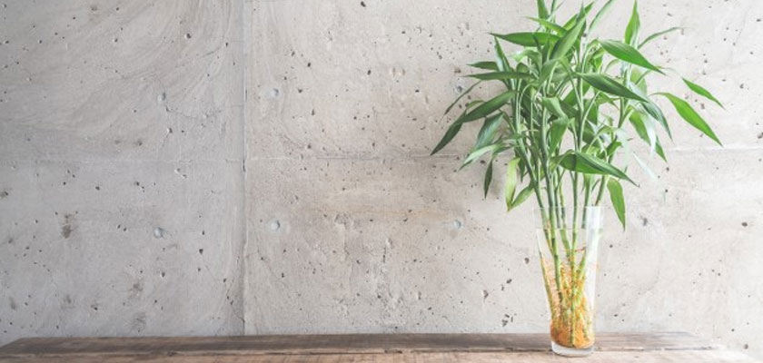 zen-blog-bamboo