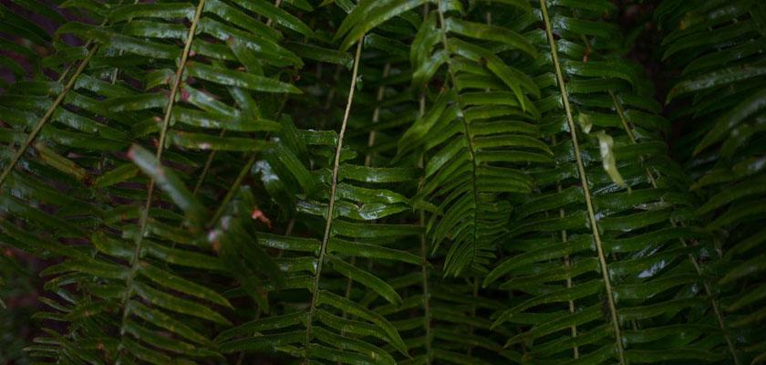 zen-blog-plants