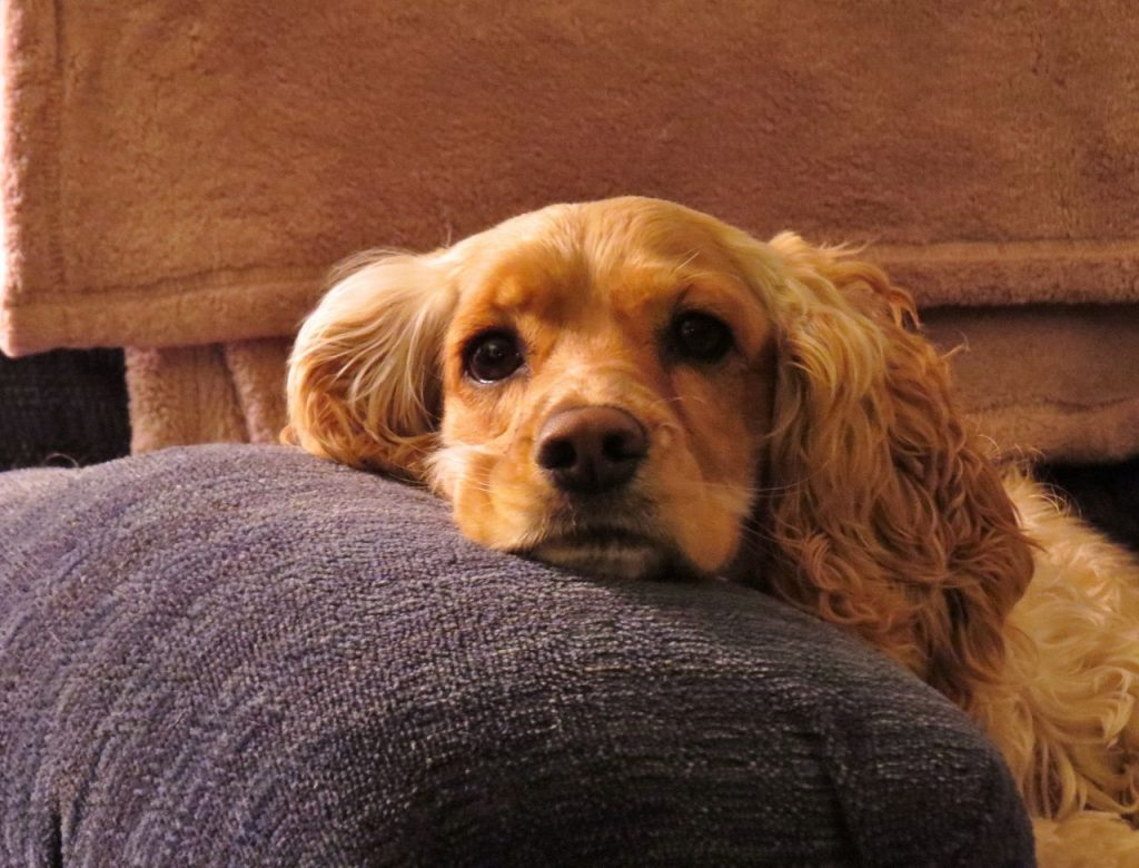 vloerkleed hond
